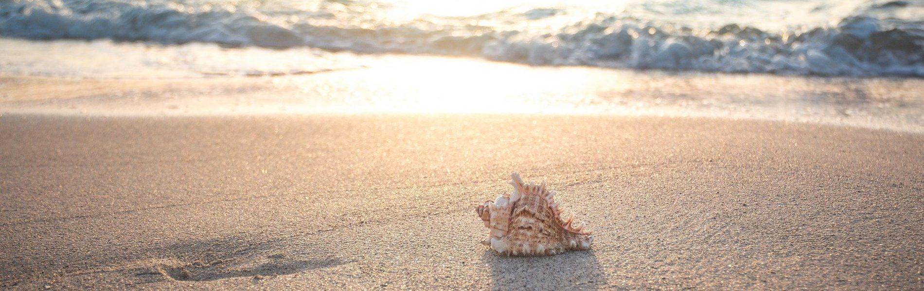 beach-4301479_1920