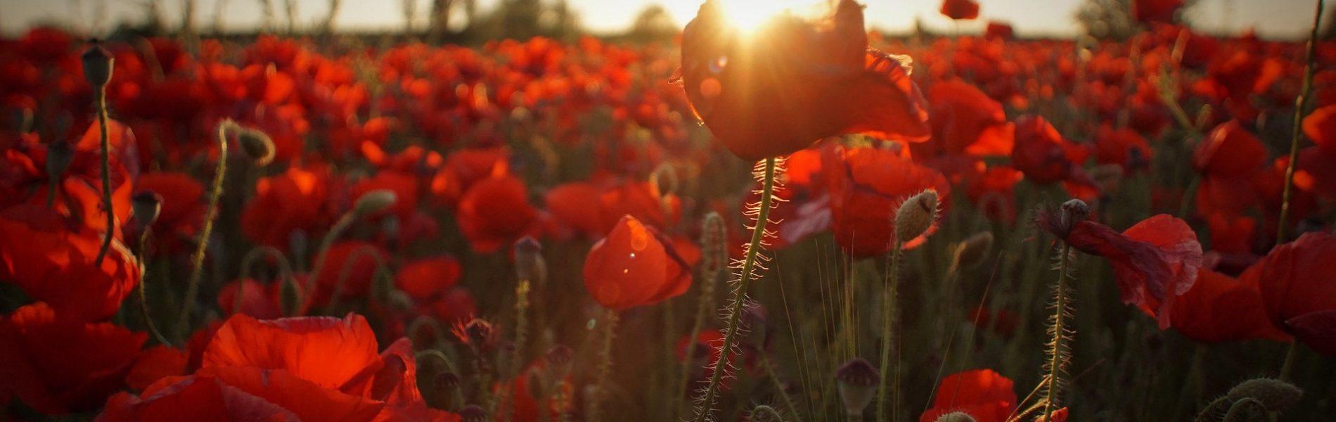 bloom-1844757_1920